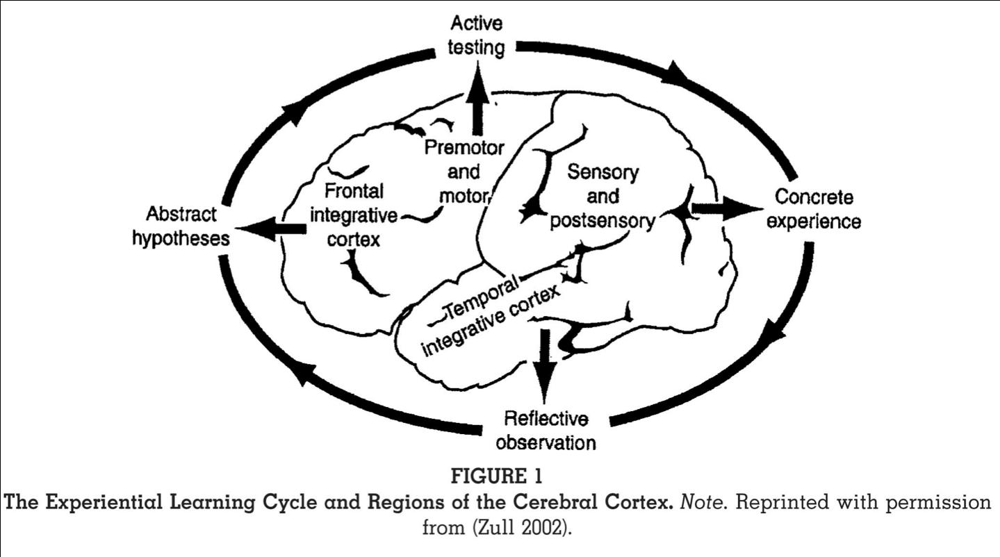zull_regions_cerebral_cortex