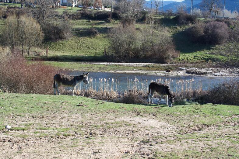 Proctor en Segovia spring 2015