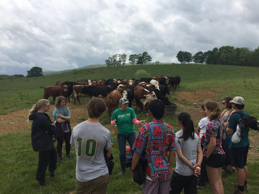 7_WV_Learning about Cows at Polyface Farm.jpg