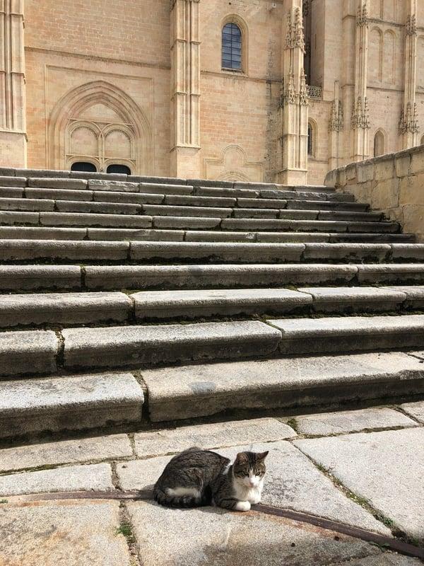 Proctor en Segovia old quarter cat