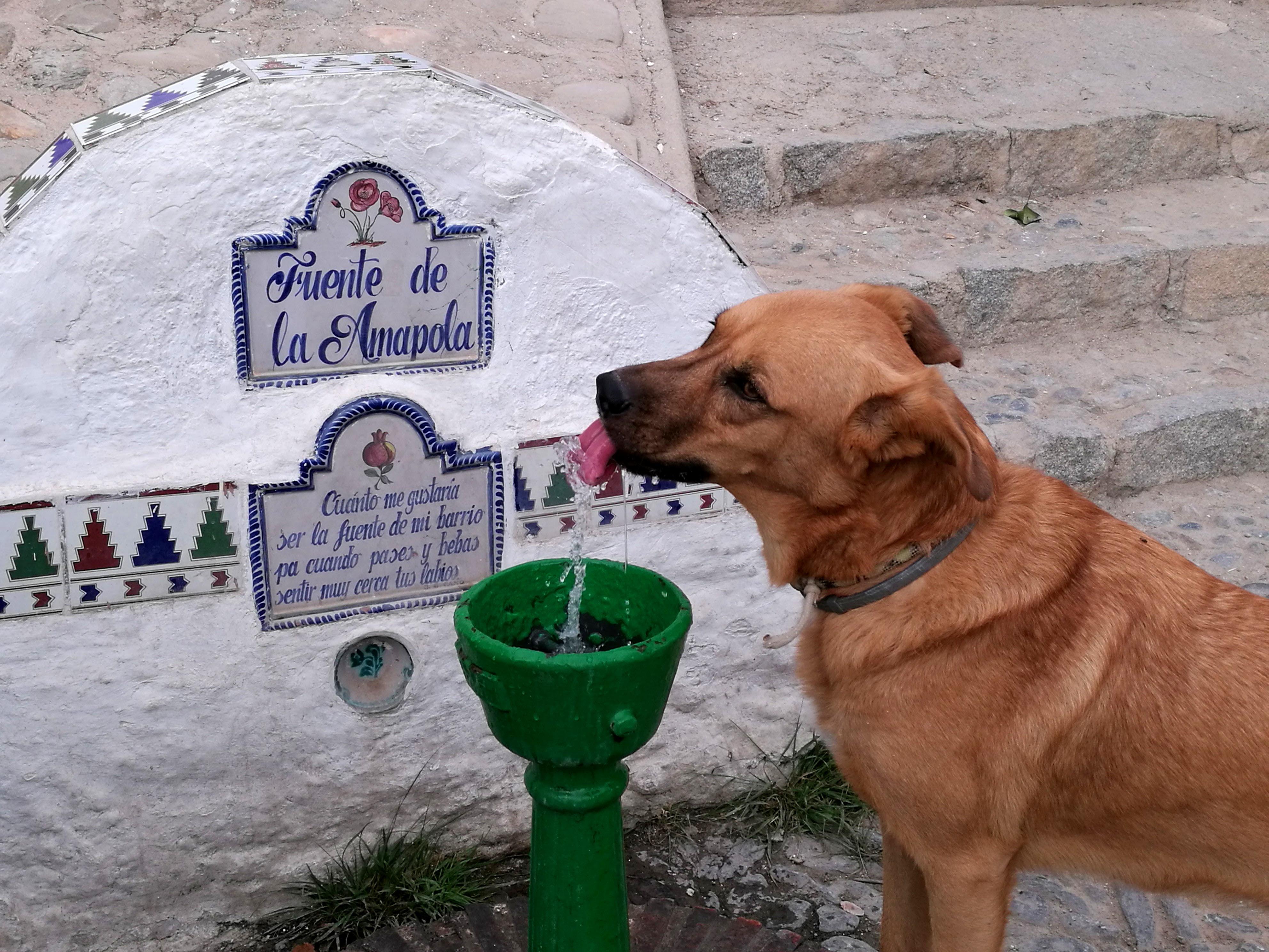 Proctor en Segovia explores the Sacromonte neighborhood of Granada