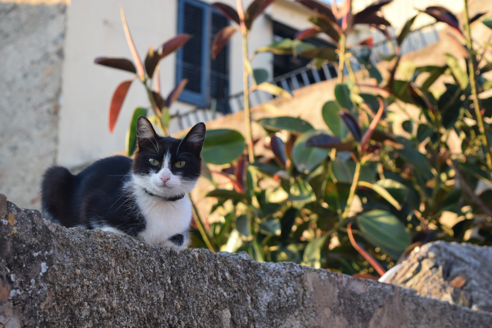 Proctor en Segovia stays in a rural northern Catalan town